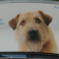This is an incredibly well executed campaign.